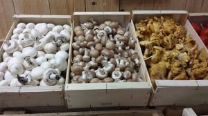 champignons des bois - cèpes et girolles