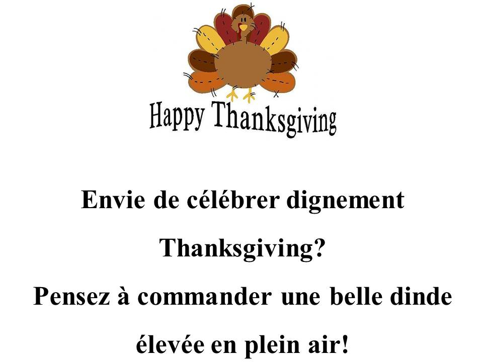 Dinde pour Thanksgiving